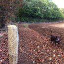 Rabbit-fencing-9