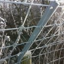 otter-fencing-3