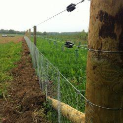 rabbit-fencing